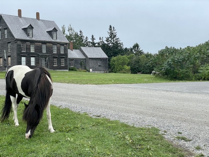 black and white horse in front. ofa farmhouse