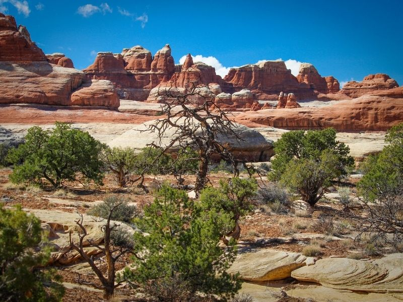 Red and white rock formations called 'the needles' in Canyonlands National Park