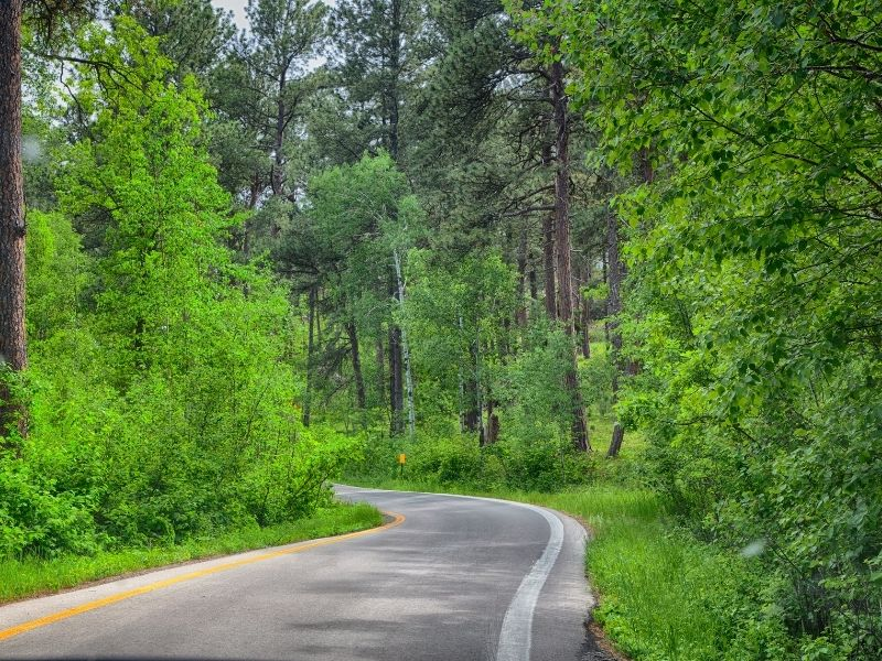 road tripping through the green forest of south dakota