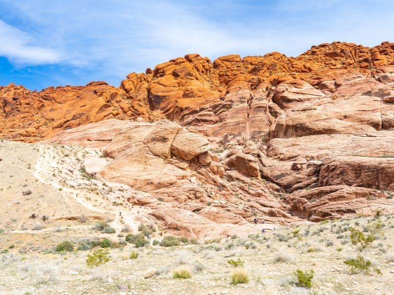 visiting the red rocks of red rock canyon in las vegas with shrubbery and desert flora