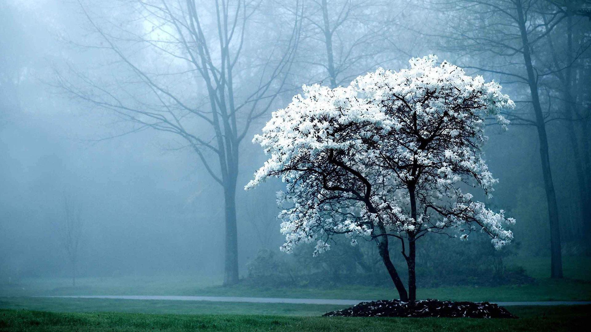 Karma Tree On Foggy Day