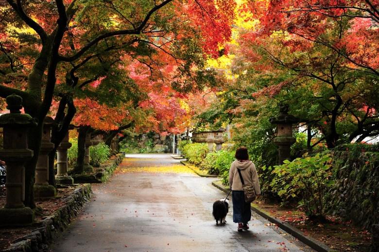 autunno giappone momijigari