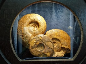 Museum of Natural History at Lygourio Eternal Greece Ltd