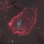 Uma Lula Gigante dentro de um Morcego Cósmico por Steve Cannistra