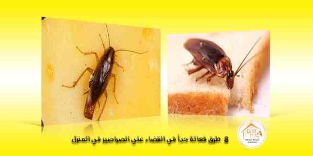 8 طرق فعالة جداُ في القضاء علي الصراصير في المنزل