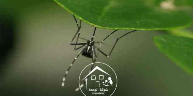 صورة لحشرة علي الزرع