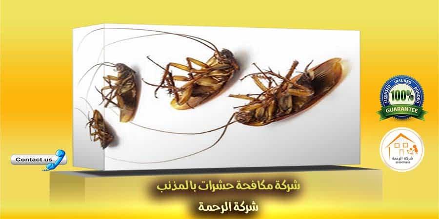 شركة مكافحة حشرات بالمذنب