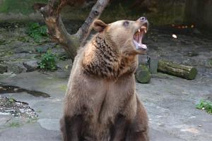 Bear Market Short Inverse