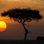 Misztikus Afrika