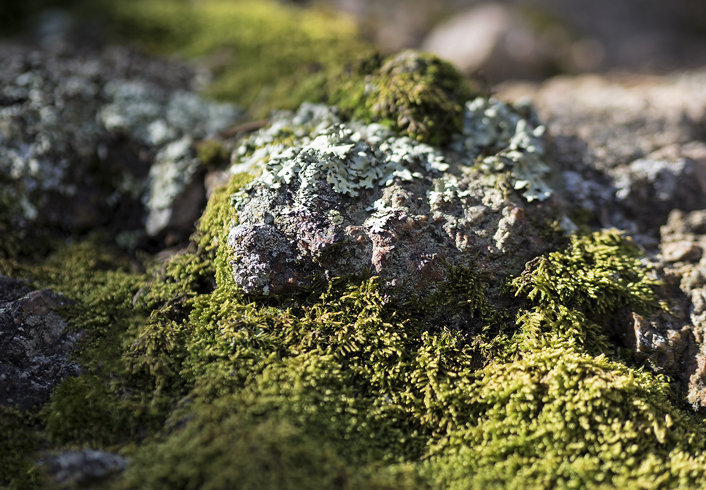 On Mosses Modesty And Sustainability