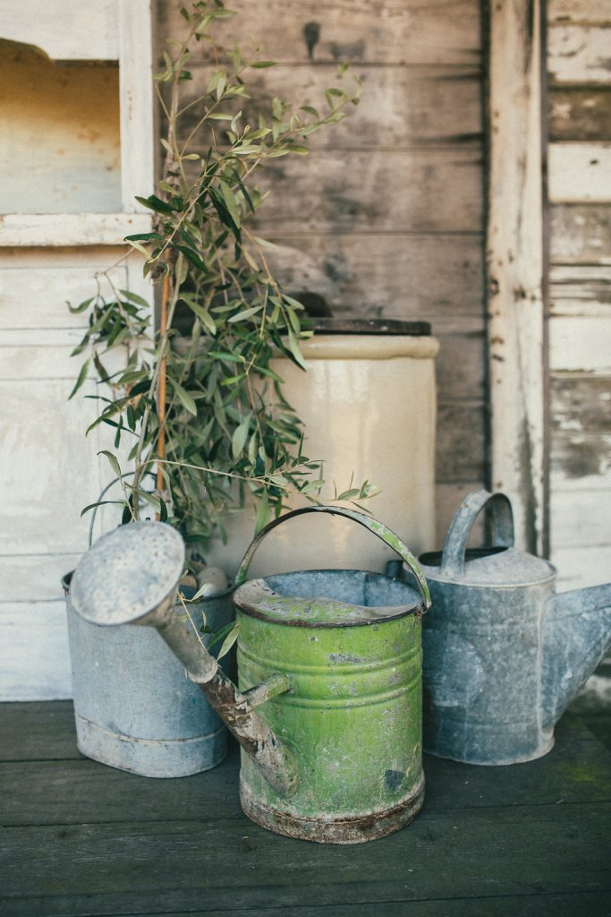 several watering cans placed next to a small tree