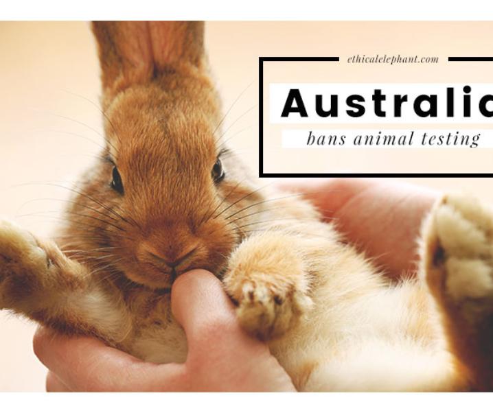 Australia Bans Animal Testing for Cosmetics by 2018!