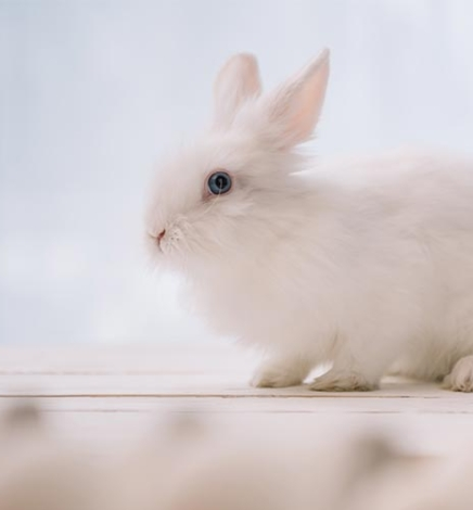 Cruelty-Free Checklist to Know if a Brand Tests on Animals or Not