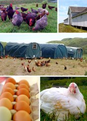 Perfect Chicken