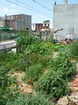 Self sustaining urban food forest on a once vacant lot