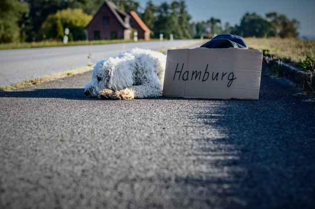 white long coat dog lying on highway
