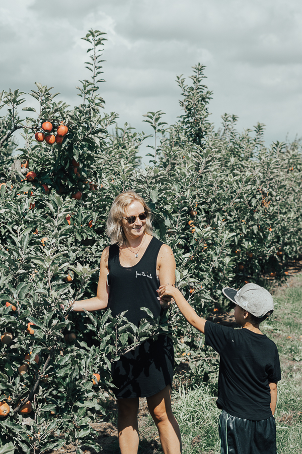applie-picking-taves-family-farms-abbotsford-bc