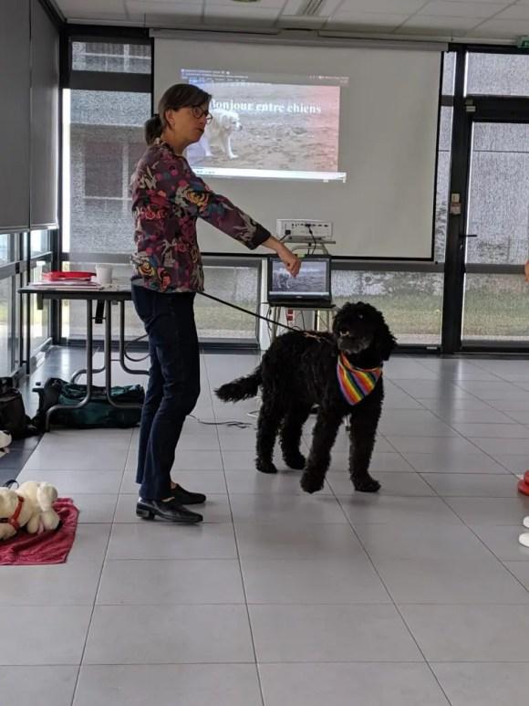 Comment approcher un chien