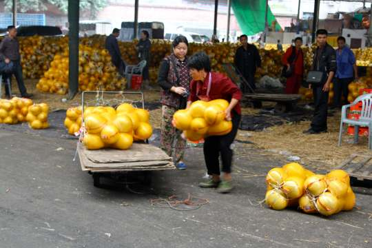 Loading pomelo for delivery