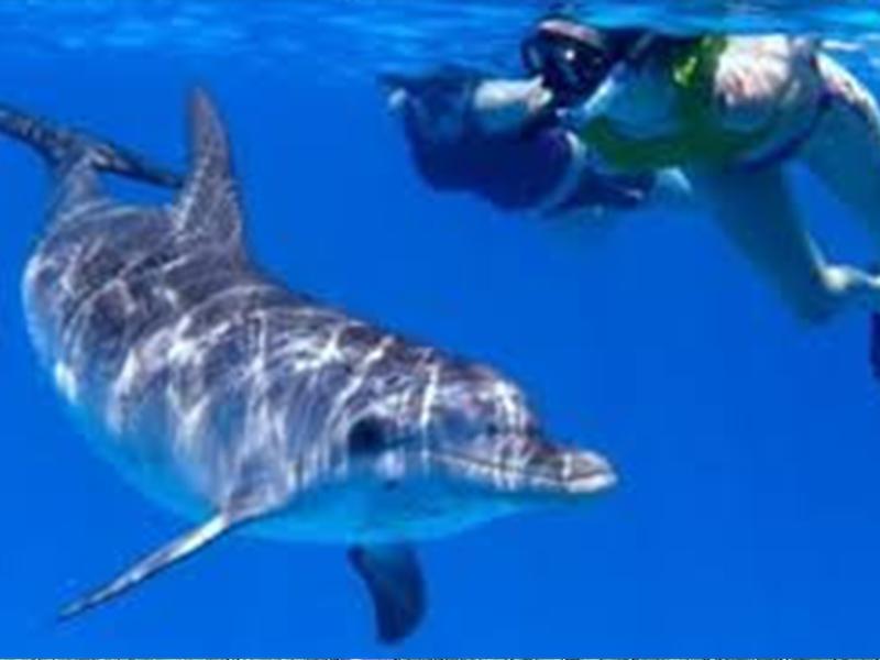 Delfin-Schwimmen im Roten Meer in Ägypten