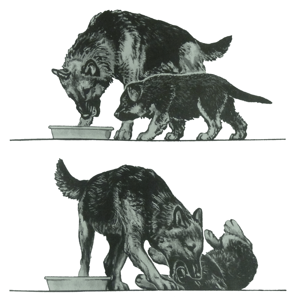 "Canine maternal behavior is more than just feeding the pups. It is also to teach them dog language (Illustration by Alice Rasmussen from ""Dog Language"" by Roger Abrantes)."