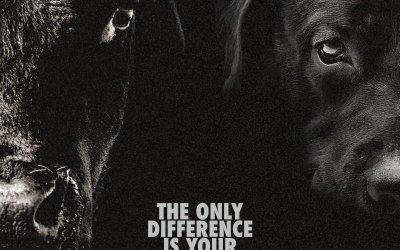 Αποκαλυπτική Aνάρτηση στο Facebook Τονίζει Την Υποκριτική Συμπεριφορά των ανθρώπων προς τα ζώα