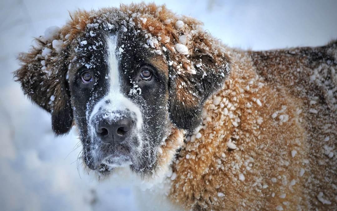 Γιατί είναι μεγαλύτερη ανάγκη να φροντίζουμε τα αδέσποτα ζώα όταν έχει κρύο