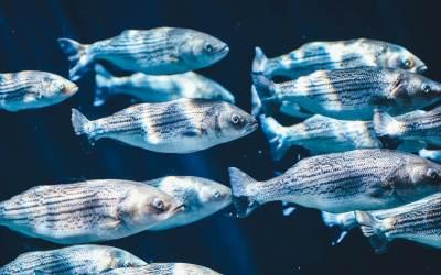 Μια Διαφορετική Οπτική για τα Ψάρια, Μέρος Τρίτο: Γιατί και Πώς να Τερματίσουμε το Ψάρεμα;