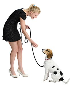 condicionamento-operante-caes-cachorros-comportamento-canino-psicologia-animal-helena-truksa-244x300