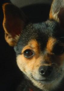 Leis de Proteção aos Animais no Brasil - Ethos Psicologia Animal