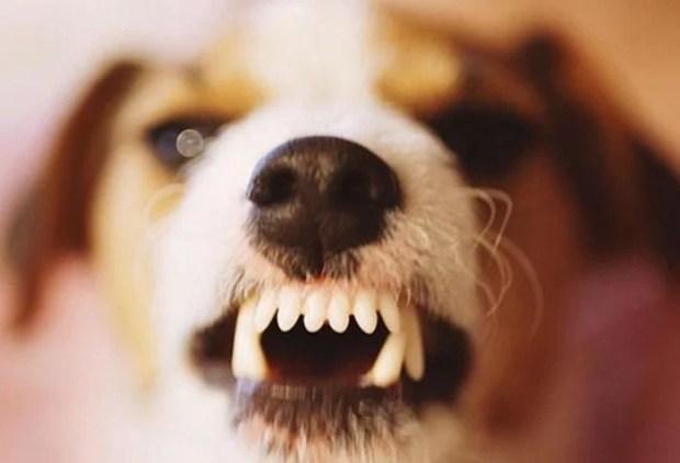 agressividade em cães pode ser depressão