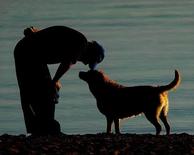 a evolução paralela de cães e humanos