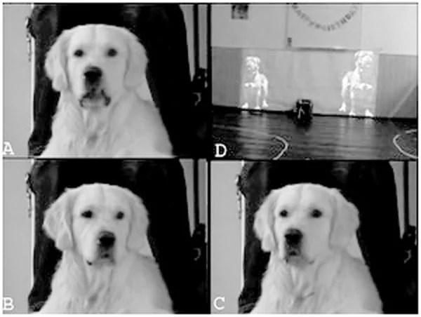 cognicao-social-rosnado-avaliacao-tamanho-cao-psicologia-canina-experimento-cientifico-ethos-comportamento-animal