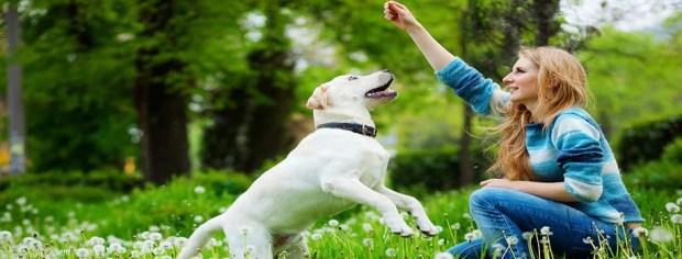 treinamento de cães adestramento positivo ethos animal