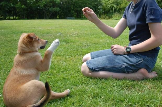 adestramento treinamento de caes ethos animal terapia comportamental especialista em comportamento animal helena truksa