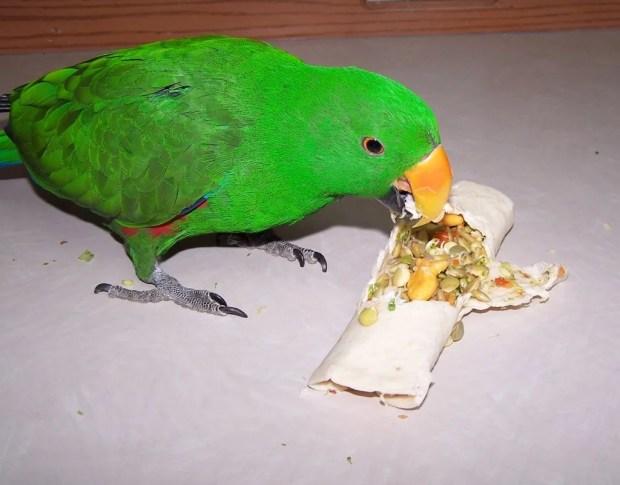 cuidados gerais de aves pet higiene da gaiola