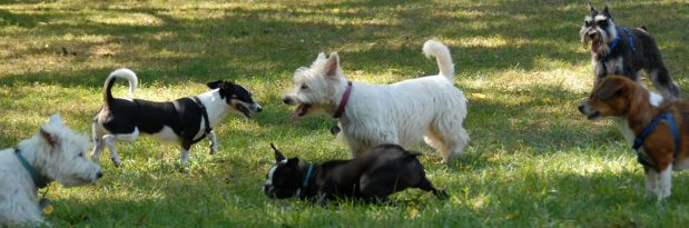 parque de cães helena truksa especialista em comportamento animal psicologia animal