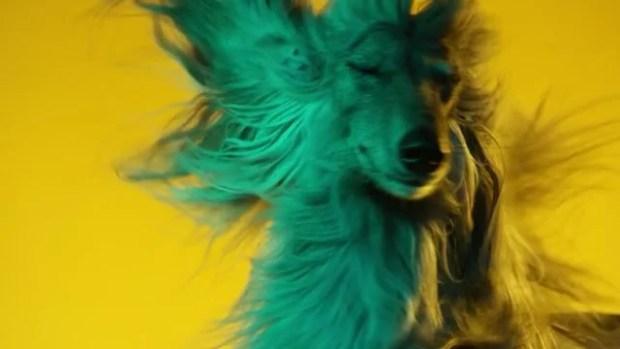 As Preferências Musicais dos Cães Domésticos