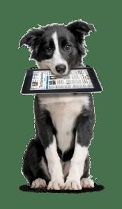 assessoria de imprensa ethos animal comportamento bem estar treinamento adestramento