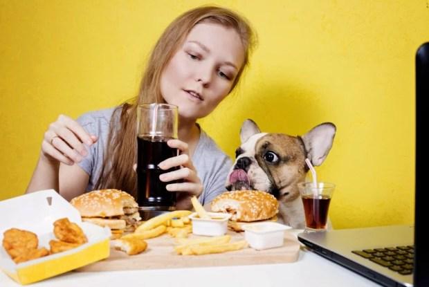 alimentação afetiva e obesidade em cães e gatos