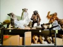 Montarias e crânios revestem a parede do armazém de coleções no Laboratório Forense do Serviço de Conservação de Peixes e Vida Selvagem dos EUA.
