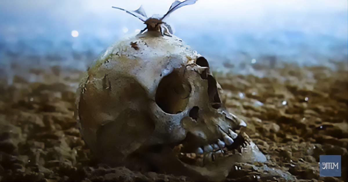 Вымирание. Этот таинственный мир