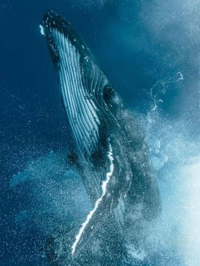 Может ли синий кит проглотить человека?