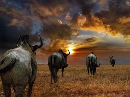 Wildlife under threat from legal trade in Southern Africa