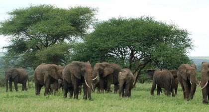 Elephant killing threatens tourism in Selous Game Reserve