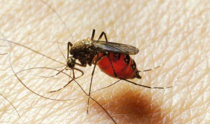 World Health Organization: Caution against Zika should remain high