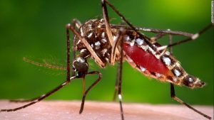 Citizen Led Alliance against Mosquito Borne Diseases Joins Global Fight to Save 2.7 Million Lives Every Year