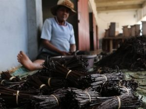 Vanilla price spike fuels crime across Madagascar