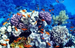 Corals and Tourism