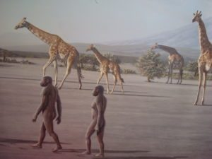 Discovery of  the origin of man: Olduvai Gorge Museum Tanzania open for visitors